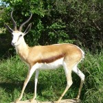 mount-fullspringbuck