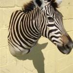 mount-zebra1